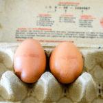 食料品スキャンダル - オランダ産の卵は危ない? | Pfadfinder24